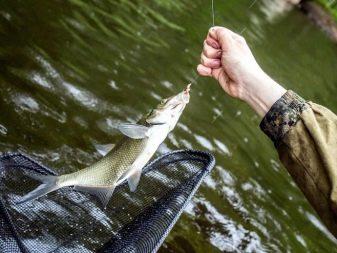 Леска для рыбалки