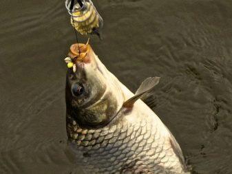 Секреты ловли рыбы на соску