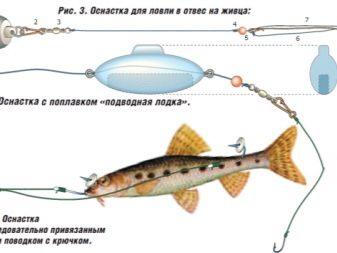 Ловля судака в отвес: подготовка и способы ловли