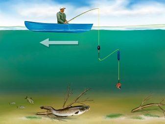 Как ловить сома на лягушку и подобрать снасти