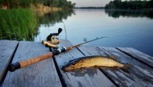 Особенности рыбалки в Валуйках