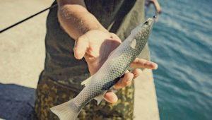 Как ловить кефаль в Черном море?
