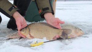 Все, что нужно знать о ловле карася зимой