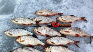 Все о ловле плотвы зимой