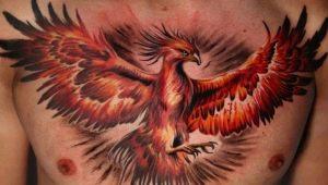 Все о тату для мужчин с изображением феникса