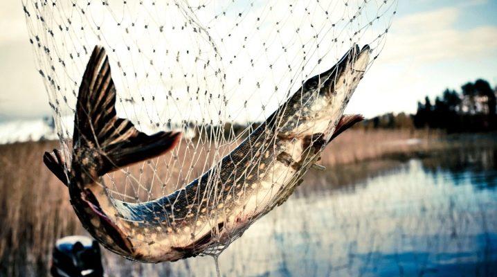 Все о рыбалке сетями