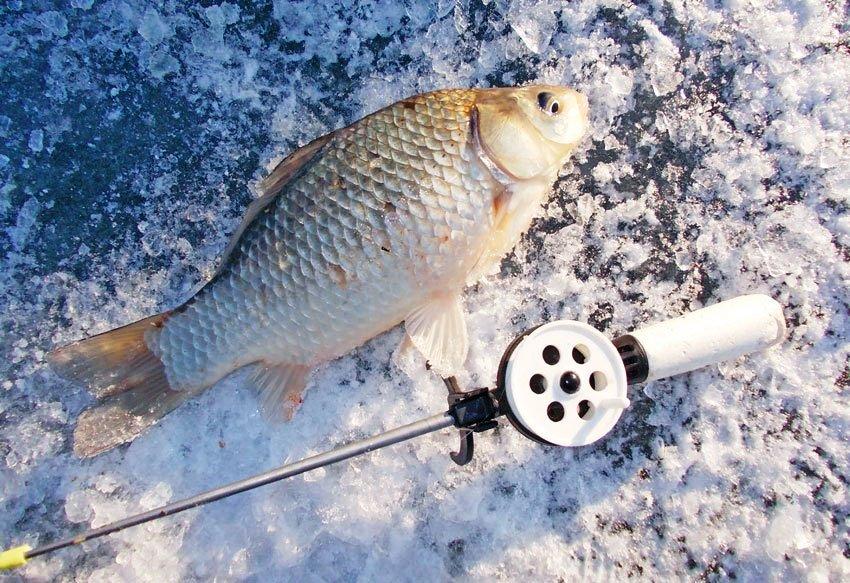 какая рыба клюет ночью зимой