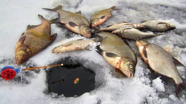 прикормка для зимней рыбалки на щуку